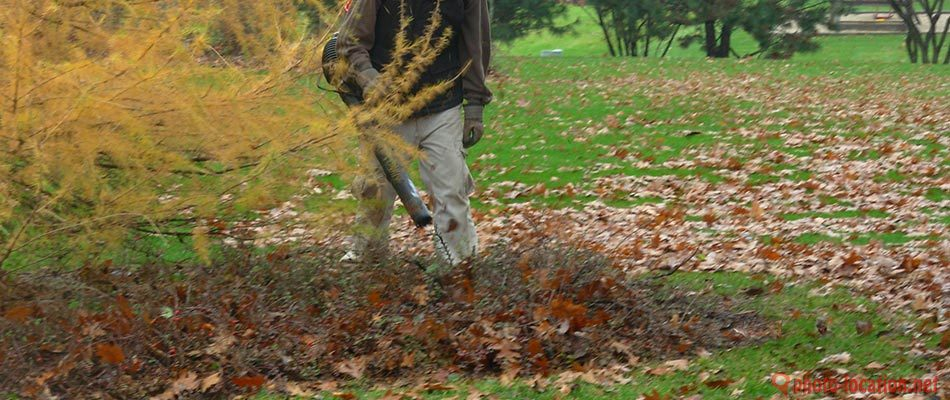 Reasons Fall Yard Cleanups Benefit Your Lawn