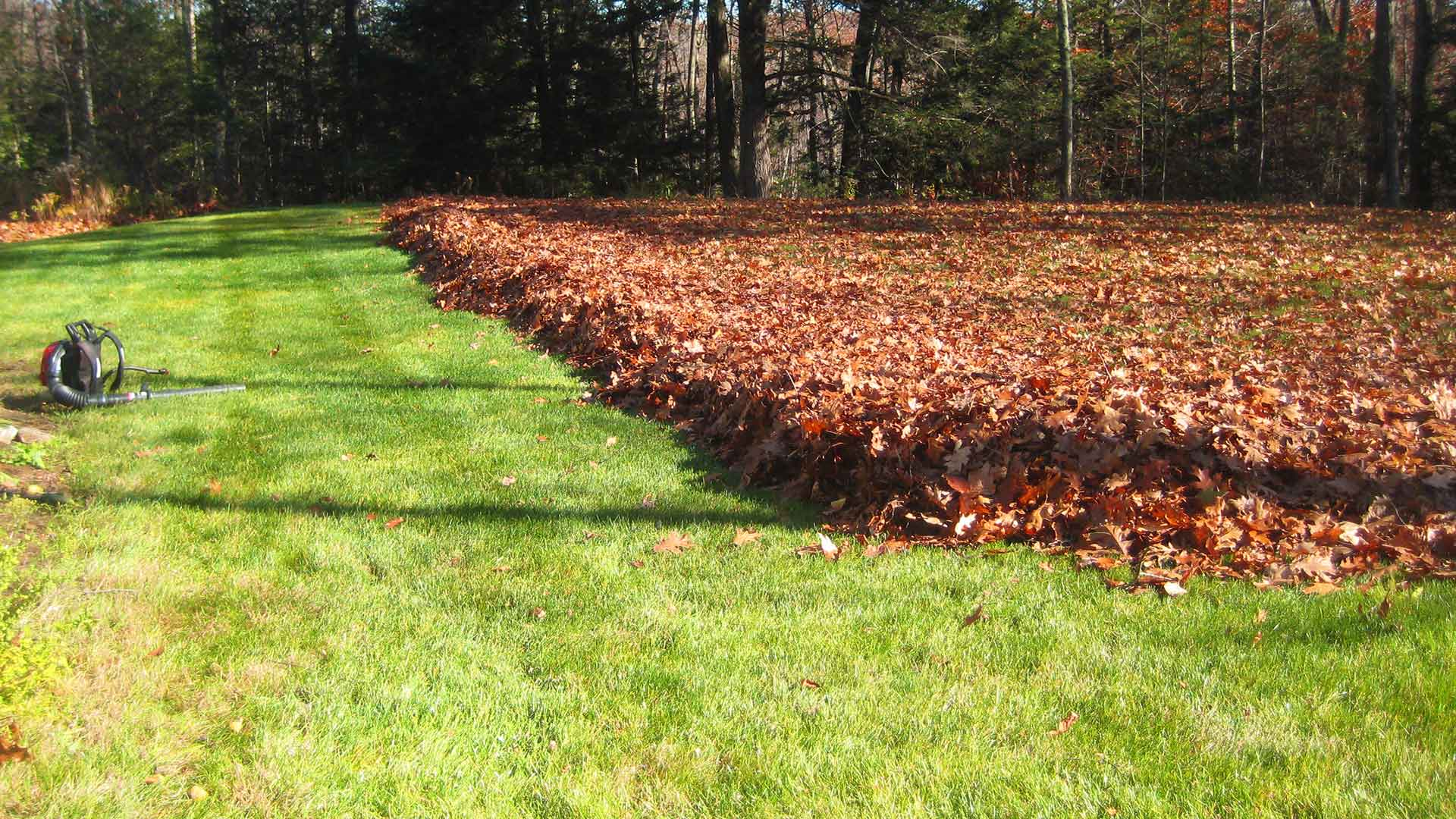 Big leaf removal job that is about halfway completed for the backyard of a homeowner.