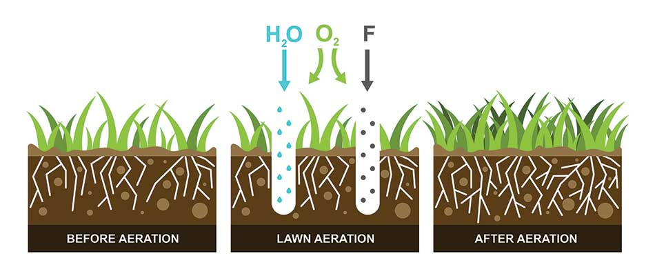 Core aeration infographic for lawns in the Brookfield, Elm Grove, WI area.