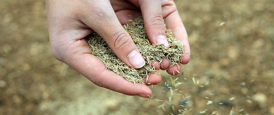 Grass seeds falling from hands near Wauwatosa, WI.