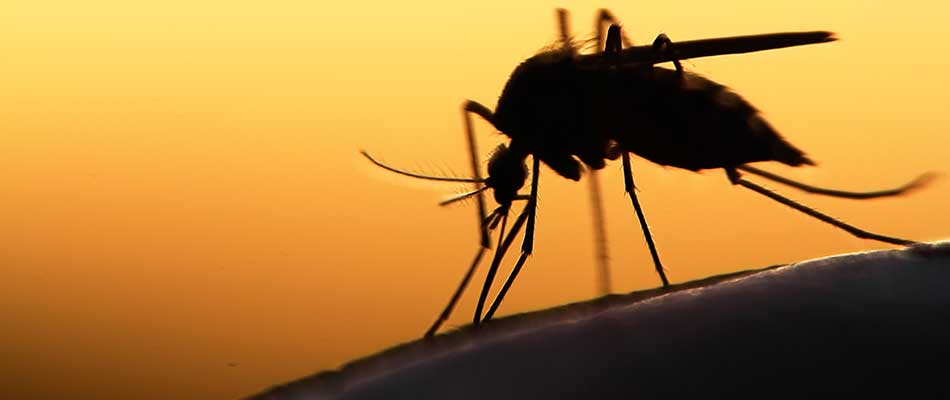Why You Should Recruit a Mosquito Control Company