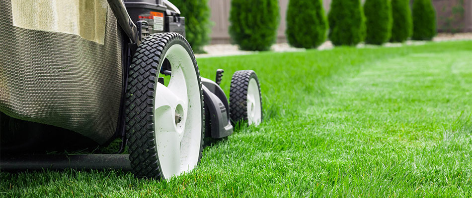 4 Must-Have Summer Services for Your Lawn & Landscape