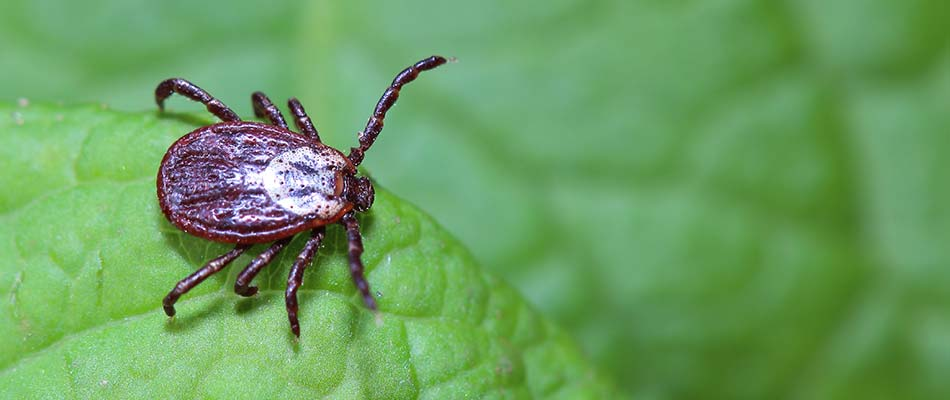 Make Your Property Less Attractive to Ticks and their Hosts!