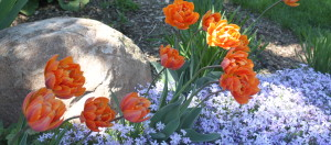 Flowers that have been planted within the landscape bed of a Brookfield, Elm Grove homeowner.