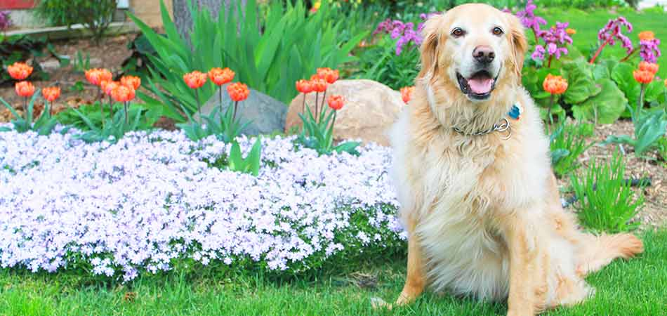 The annuals planted in the backyard of this dog-loving homeowner in Pewaukee, WI have blossomed out into an incredible bloom.