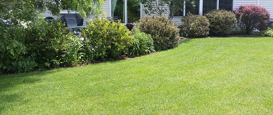 Well fertilized home lawn in Wauwatosa, WI.