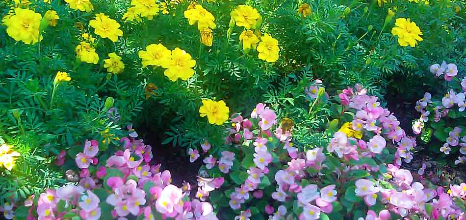 Annuals that have been planted in the flower bed of a home in Brookfield, WI.