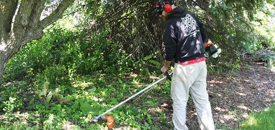 This Beautiful Blooms Landscape & Design, LLC team member is using a string trimmer during the yard cleanup service being performed for this overgrown property in Wauwatosa, WI.
