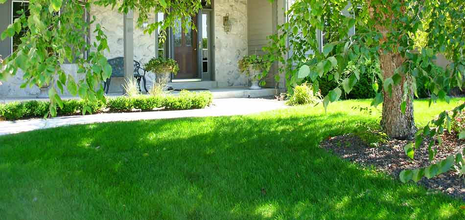 The front turf of this Wauwatosa, WI property is reaping the benefits of aeration that was done in the previous fall.
