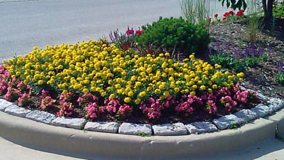 Pewaukee, WI landscape bed that has annuals installed as part of the Color.365 program from Beautiful Blooms Landscape & Design, LLC.